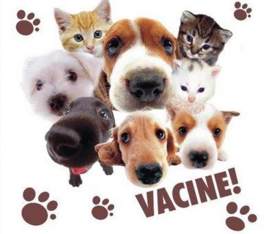 A importância da vacinação em cães e gatos