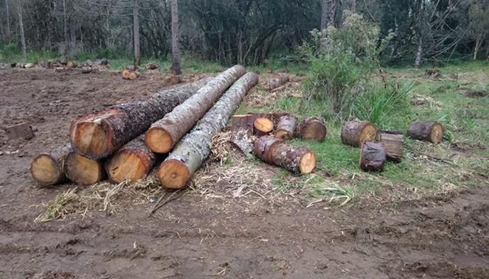 Pinhão - Polícia Ambiental apreende mais de 100 toras de araucária cortadas ilegalmente no interior do município