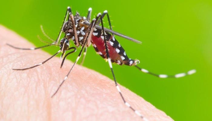 Boletim confirma mais de 1,2 mil casos de dengue no Paraná; sete municípios estão em epidemia