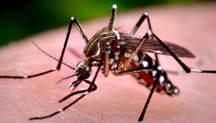 Paraná 12 mortes por dengue em uma semana; pacientes de 8 e 16 anos entre as vítimas